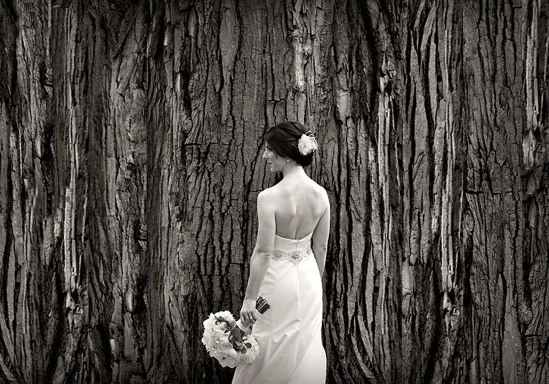 Bride portrait by tree at St. Paul wedding